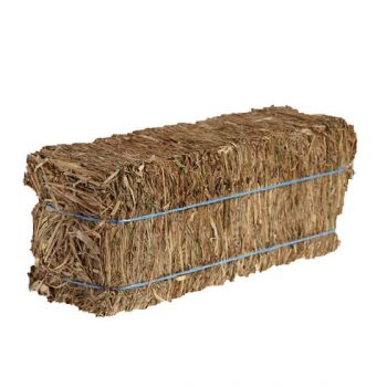 Grass Hay Rectangle Bale