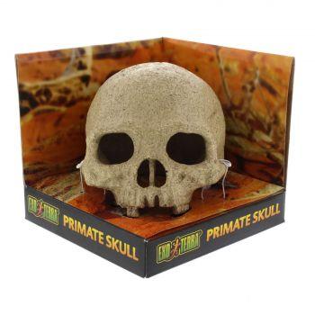 Primate Skull Exo Terra Large Realistic Secure Hiding Desert Terrarium