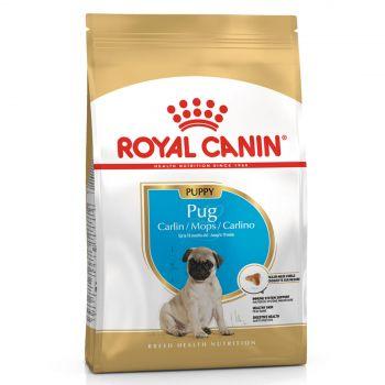 Royal Canin Pug Junior 1.5kg Dog Food Breed Specific Premium Dry Food