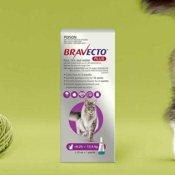 Bravecto Cat Plus 500Mg 6.25-12.5Kg Purple